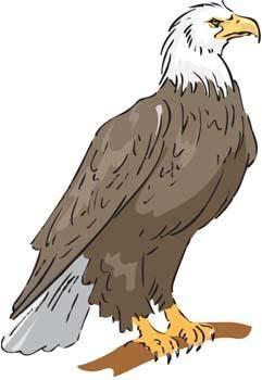 Eagle vector 2