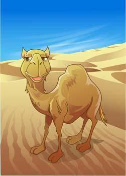 Camel Vector 14