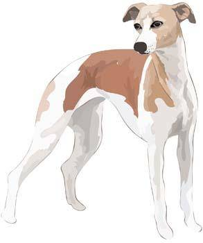 Beautiful Dog Vector 4