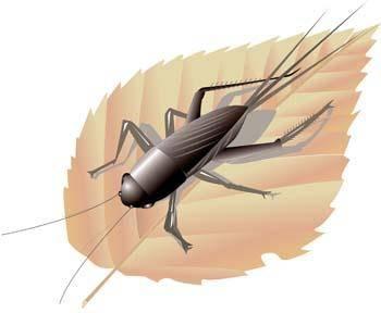 Bug Vector 4