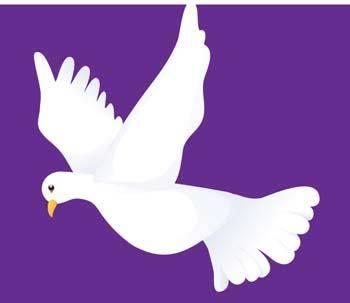 Pigeon vector 6