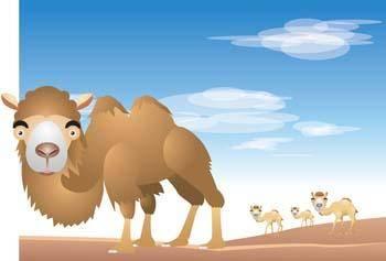 Camel Vector 13