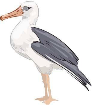 free vector Seagull vector 1