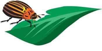 free vector Bugs 7
