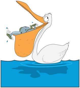 free vector Pelican 2