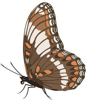 free vector Butterfly Vector 10