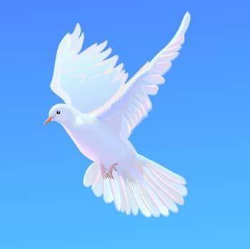 Pigeon vector 4