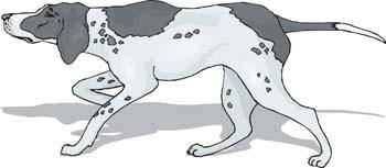 Dog collection vector 1