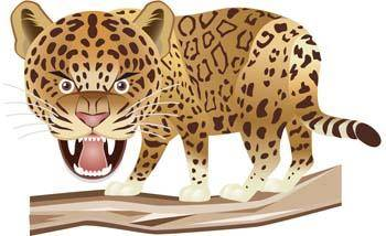 free vector Leopard 6