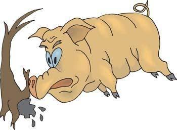 Pig 41