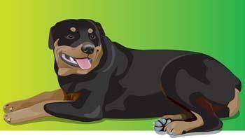 free vector Rottweiler 1