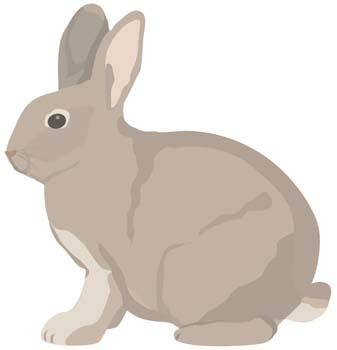 free vector Rabbit 9