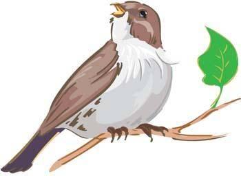 Bird Vector 1