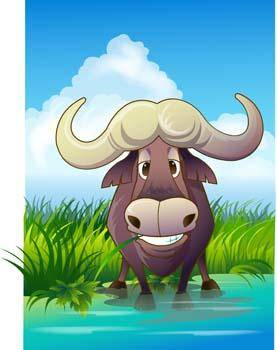 free vector Bull Vector 15