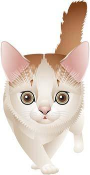 Cat vector 70