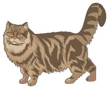 free vector Cat vector 43