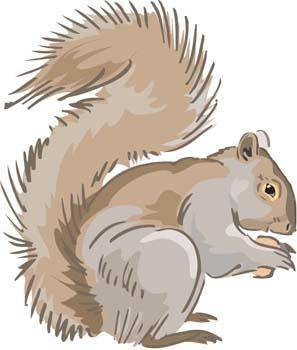 Squirrel Vector 1