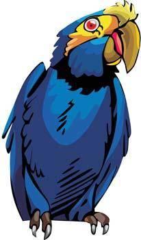 Myna bird 4