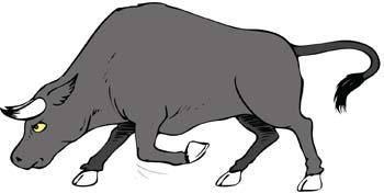Bull Vector 13