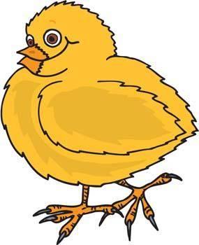 free vector Little Chicken vector 6