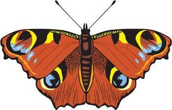 free vector Butterfly Vector 8