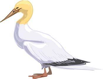 Fowl 11
