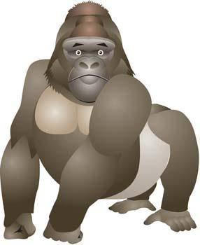 Monkey 16