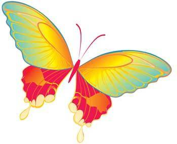 free vector Butterfly Vector 19