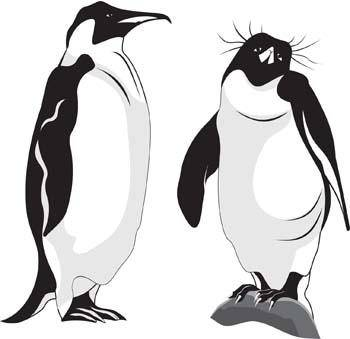 free vector Penguin 1