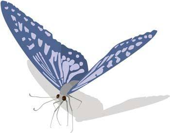 free vector Butterfly Vector 13