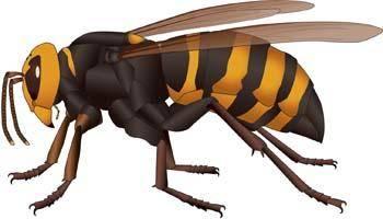 free vector Bee 26