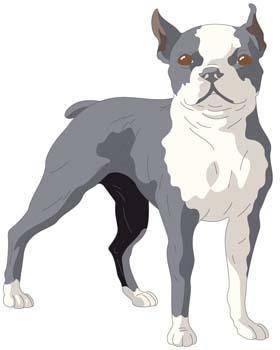 Terrier 5