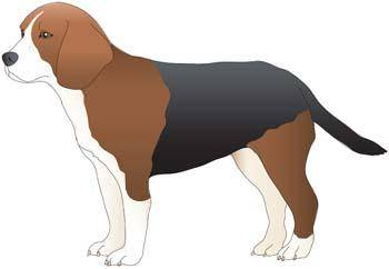 Dog collection vector 9