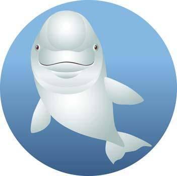 Dolphin Vector 8