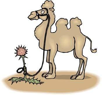 Camel Vector 3