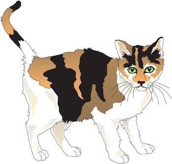 Cat vector 45