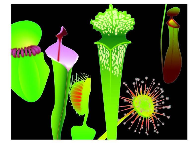 Carnivorous Plant Vectors