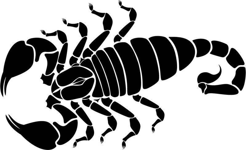 free vector Scorpion Vector Image