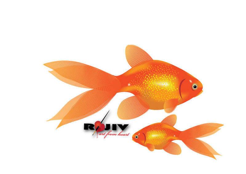 free vector Gold Fish