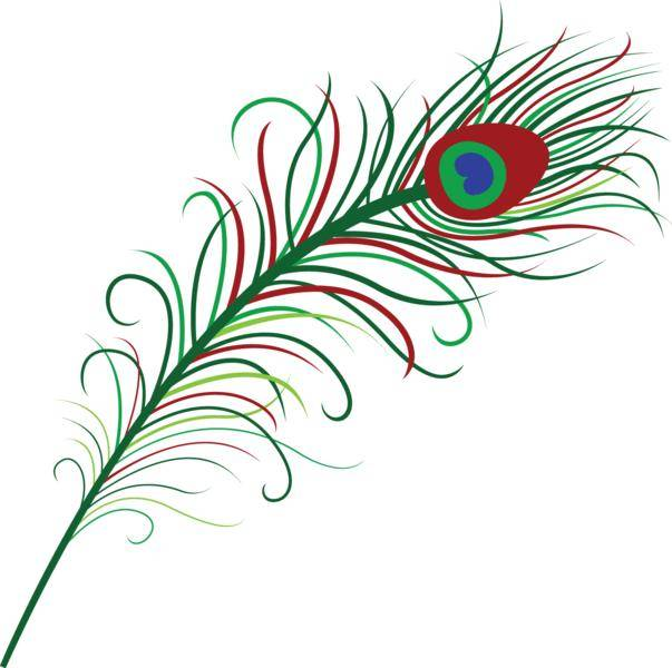 free vector Peacock Feather