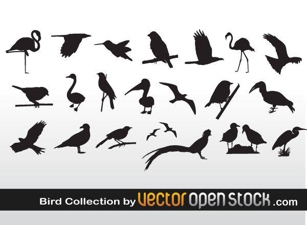 free vector Bird Collection