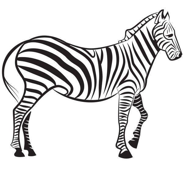 free vector Zebra Vector Image