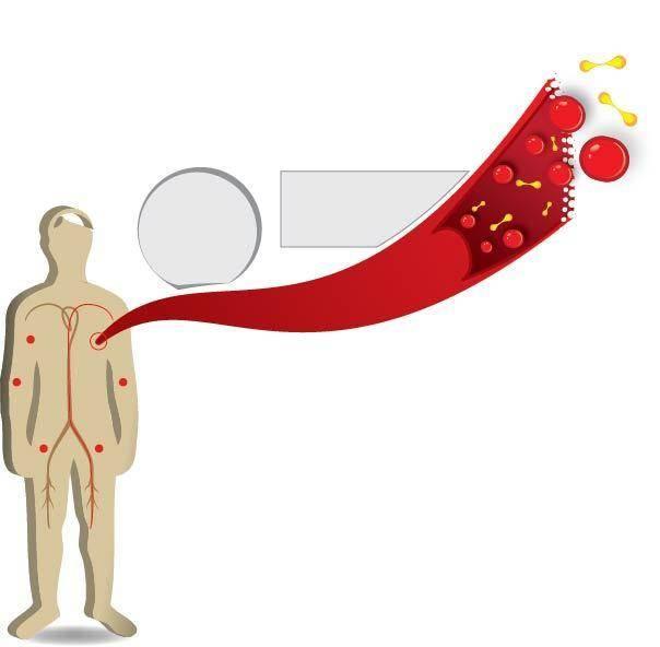 Infografico corpo células/sangue - Human Body Vector