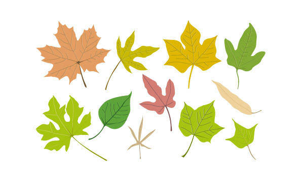free vector Vector Leaf Collection